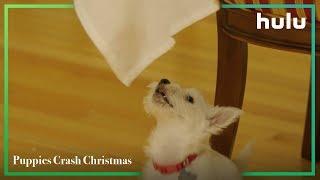 Puppies Crash Christmas • Now on Hulu