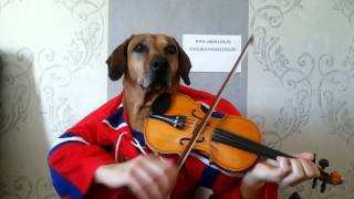 Funny animals Dog playing violin happy birthday to you