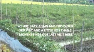 Bio Add - Baja tanaman hebat dan anat berkesan untuk Cili - Testimoni Cili