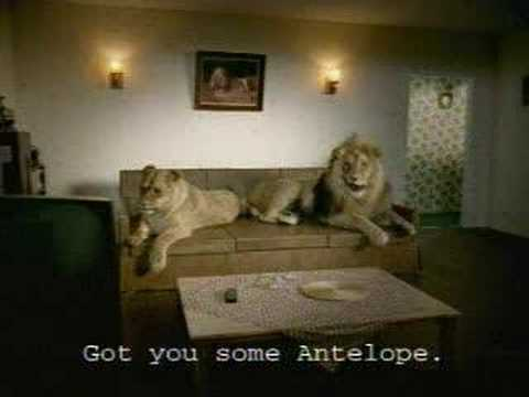 Funny lion Sex video