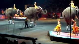 Amazing Elephants @ the Circus