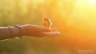 Peer Gynt - La mañana - Edvard Grieg | Lo Mejor de la Música Clásica