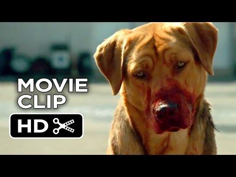 Xxx Mp4 White God Movie CLIP Dog Pack 2014 Drama HD 3gp Sex