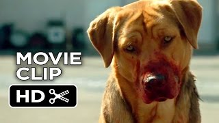 White God Movie CLIP - Dog Pack (2014) - Drama HD