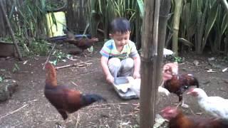 abu + ayam