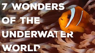 7 Wonders of the Underwater World