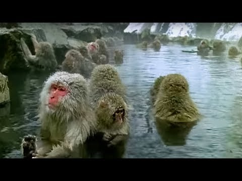 Monkey Health Spa Cousins BBC