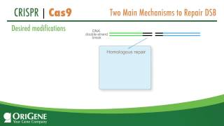 CRISPR/Cas System from OriGene, a Complete Solution for Targeted Genome Modification
