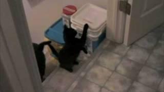 Crippled Kitten: Madison