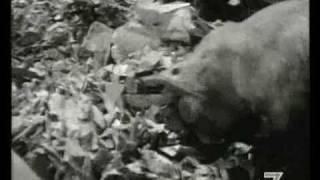 Ciprì e Maresco - Cortile Cascino 1961 - Robert Young.