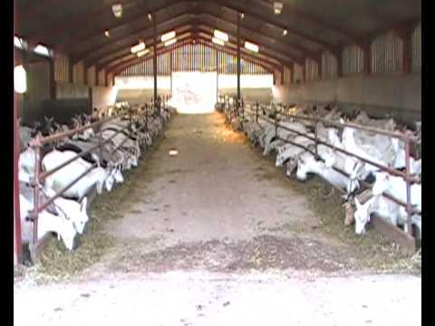 Goat farm visit