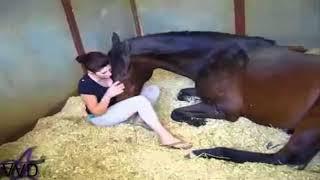 Cewek Cantik Gituan Sama Kuda