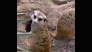 VHS VersionBarney  Let's Go To The Zoo   720p