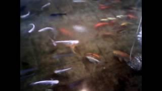 দেখুন রং বেরংয়ের মাছ