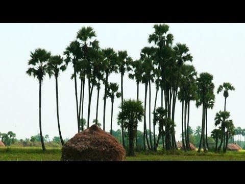 A Village in Andhra Pradesh