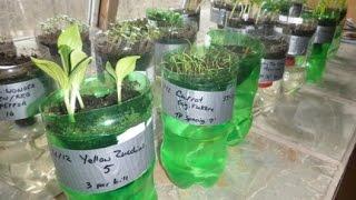 How to Make Self Watering Seed Starter DIY