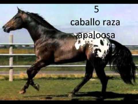 las diez mejores razas de caballos