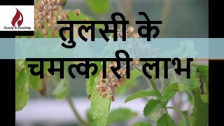 Health Benefits of Tulsi (Indian Holy Basil)| Health tips in Hindi