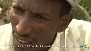 Eritrean New Comedy | ተሌቪዥን 2017