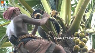 AWESOME VIDEOS !!!!  Toddy MAN !!!!!  palm Tree Climber