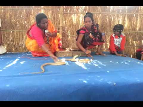 সাপ খেলা - Snake play