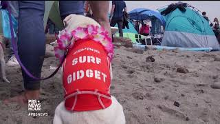 A surfing contest where everyone doggie paddles