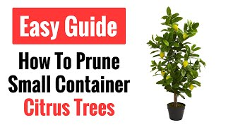 How To Prune A Small Citrus Tree