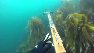 SPEARFISHING ATLANTIC OCEAN ROAD NORWAY | ADRIAN WONG