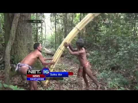 Terbatas Makanan Populasi Suku Anak Dalam Jambi Terancam NET 16