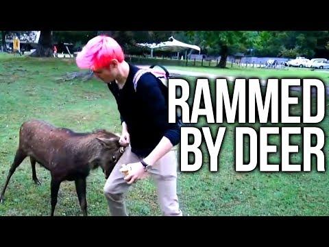 Xxx Mp4 Chance Rammed By A Deer Japan Day 11 3gp Sex