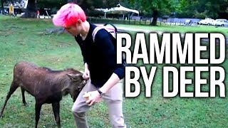 Chance Rammed By a Deer - Japan day 11