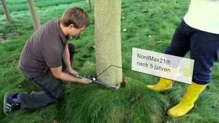 WeGrow: Der Film (Kiribaum, Kiri-Baum, Paulownia, kiri tree, KiriFonds)