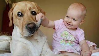 Bayi Ketawa Hysterically Pada Anjing Kompilasi Hd Baru