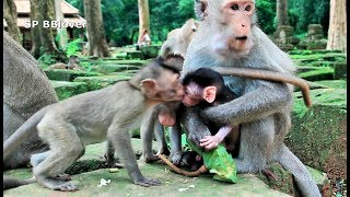 Young Monkey Want To Kiss Piper As Good Girl - SP 15