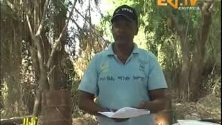 Eritrean News - ፎሮ - ምክልኻል ተመሓላለፍቲ ሕማማት by Eri TV