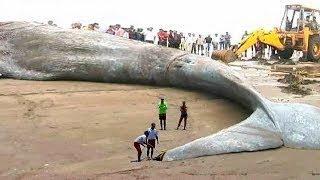 """أكبر حيوان مرعب في العالم !! """"حجمه الحقيقي لا يصدق ولا يخطر على بال أحد"""""""