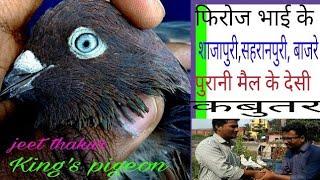 Firoz bhai ke desi shajapure ,devbandi,pigeon (kabutar)mumbra part  1.mumbai .like and subscribe