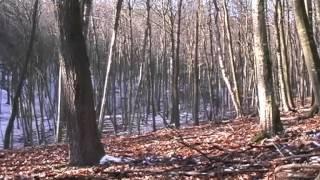 Sus Scrofa   Wildboar Hunting