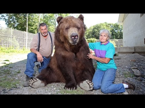 Our Big Bear Family: BEAST BUDDIES