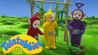 ★Teletubbies English Episodes★ Greens ★ NEW Season 16 Episode (S16E75) Cartoons For Kids