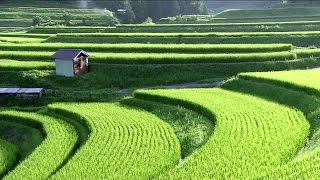 Satoyama Japan | The Secret Watergarden | Discovery English Subtitles