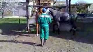 Parjenje konjev pri Račiču