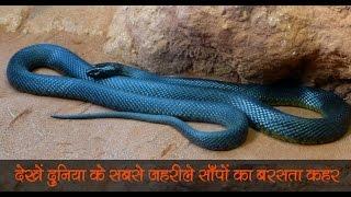 ये हैं दुनिया के 10 सबसे जहरीले सांप जिनके बारे में ...  Check Out The World's Most Poisonous Snake