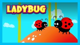 LADYBUG - Nursery Rhymes For Kids || English Poems For Kids - Animated Videos