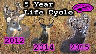 DEER HUNTING 2015: 5 Year Whitetail Life Cycle Video of Mature Buck Non Typical