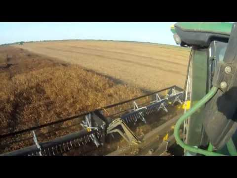 Yellow Pea harvest 2013