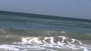 Shark swimming on shore at Topsail Island, NC June 17, 2015