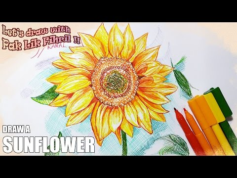 Xxx Mp4 How To Draw A Sunflower Let S Draw With Pak Lik Fihril Episode 6 3gp Sex