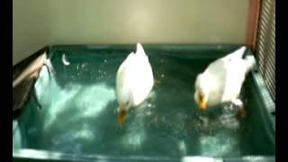 映像:動物園 音楽:岡田有希子 みずうみ