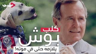 كلب بوش يلازمه حتى في موته!